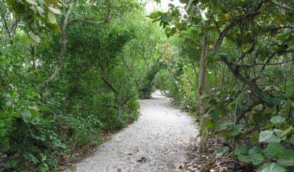 Stump Pass Trail