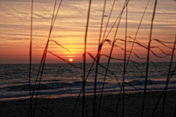 Sunset behind sea grass